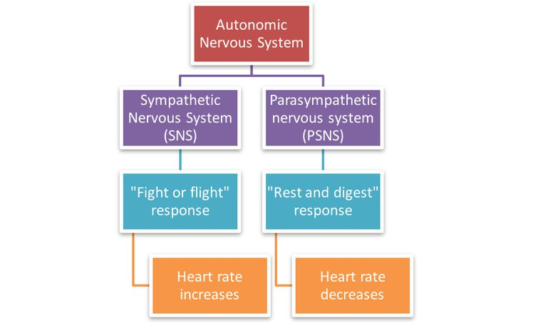 HeartyPatch - Stress and its Relation to Heart-rate